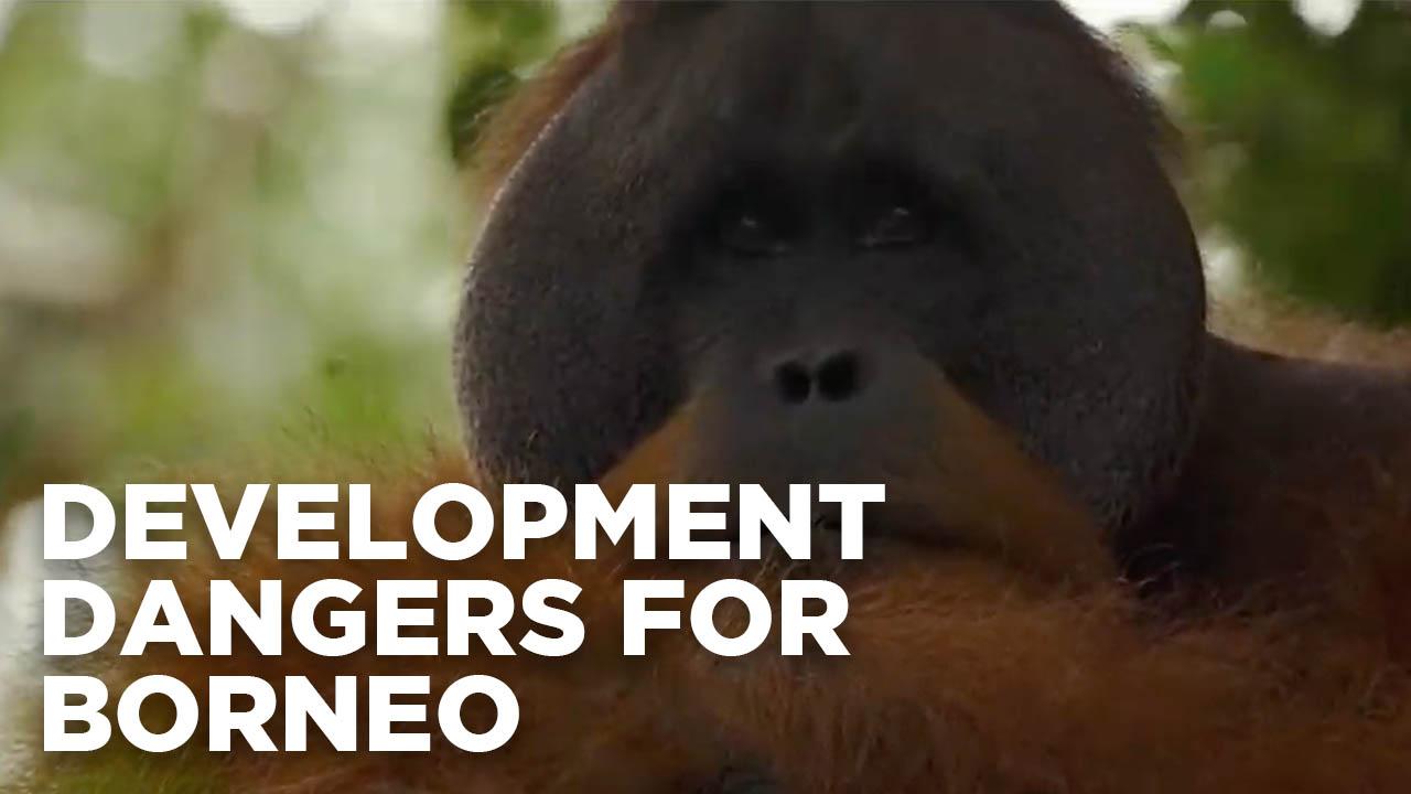 Development dangers for Borneo