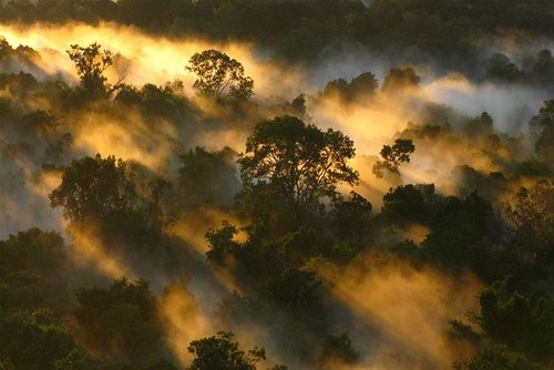 Amazon-canopy-dawn