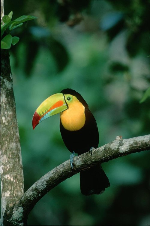 images of animals from lowland rainforest in Panama