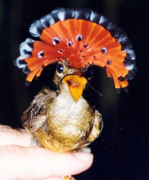 Bird-Onycor2-cropped