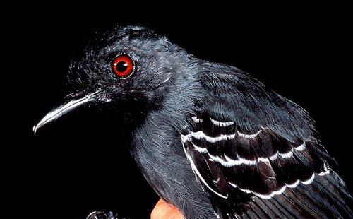 Bird1-reversed