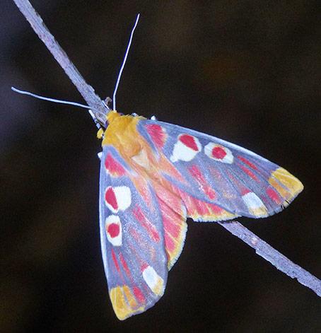 Butterfly-Dave+Rentz