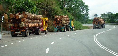 Malaysia-logging4