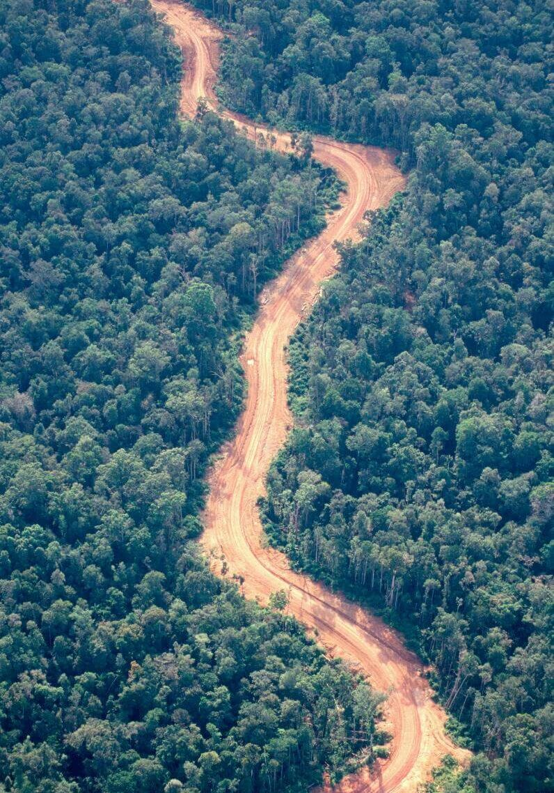 5-Logging-Road-in-Western-Province-a